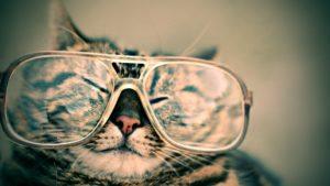 chat à lunette drôle
