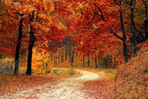 automne, periode de chasse